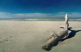 Driftwood on the beach photo by Erik Schepers via Flickr